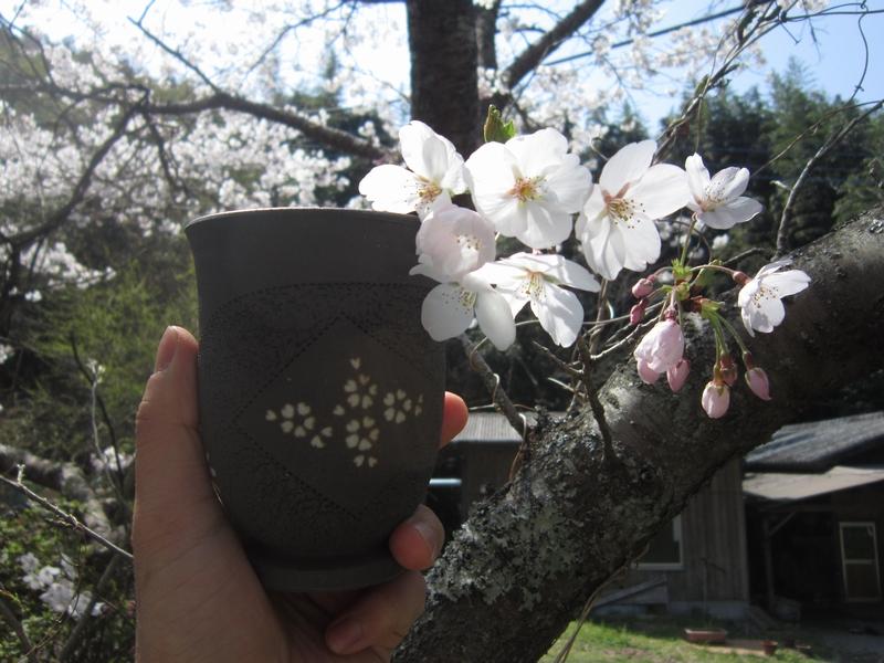 桜模様と桜 その1